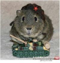 Ходят слухи, что МЫШИ научились играть в World of Tanks?! Новости
